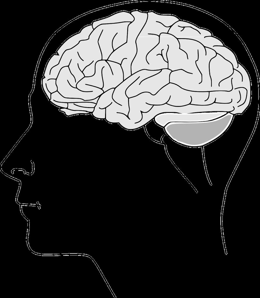 brain-153550_1280