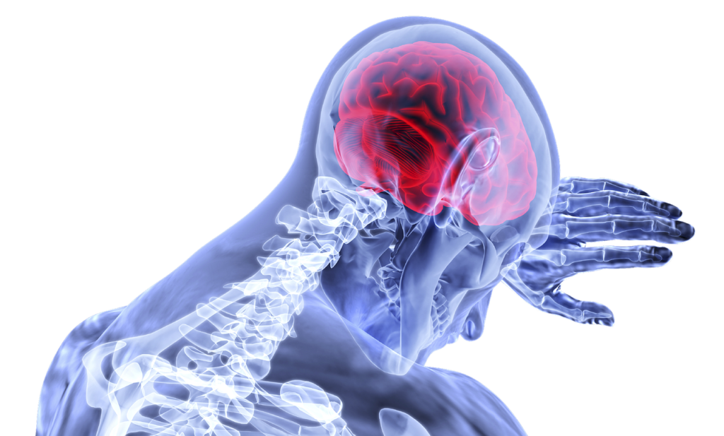 brain-3168269_1280